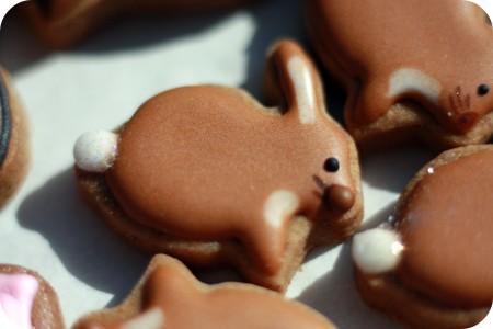 bunny2-450x300
